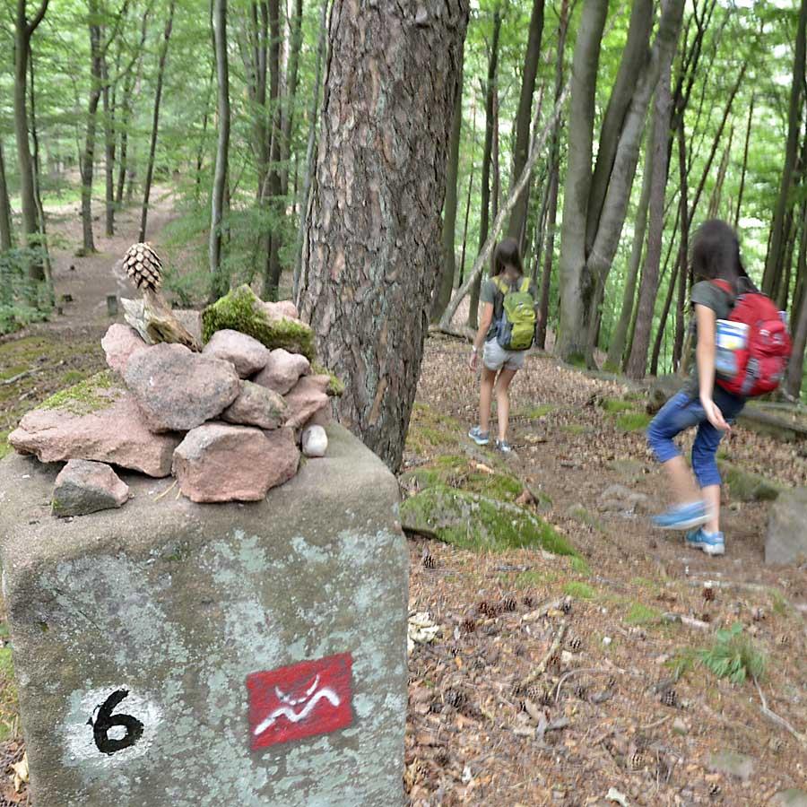 Wandern und Naturerlebnis im Pfälzerwald